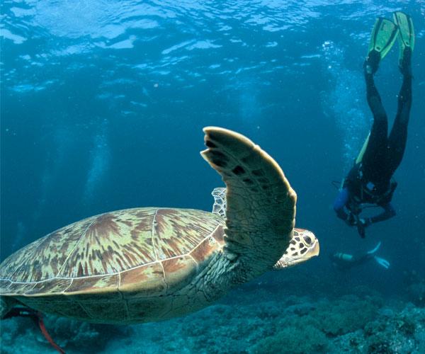 Panama tourism and wildlife discovery